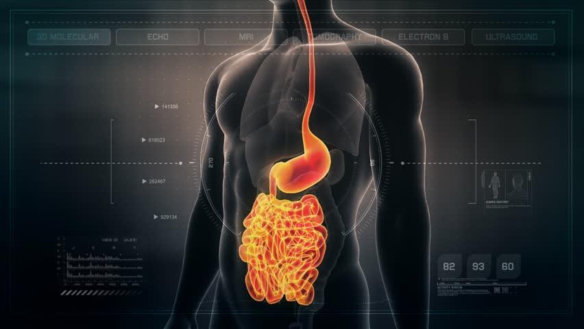 Anatomy of Human Male Gut on Futuristic Medical Interface dashboard. Seamless Loop.Animation.