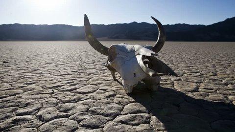 Pan of Desert Floor with Cow Skull - Death Valley