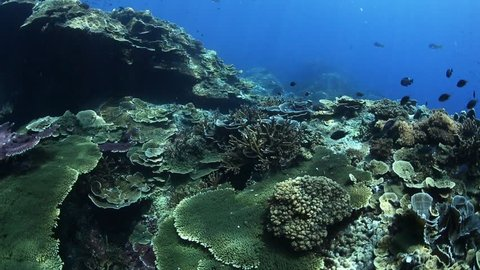 Various coral reefs in Losin , Thailand underwater photo. There are various hard coral reefs