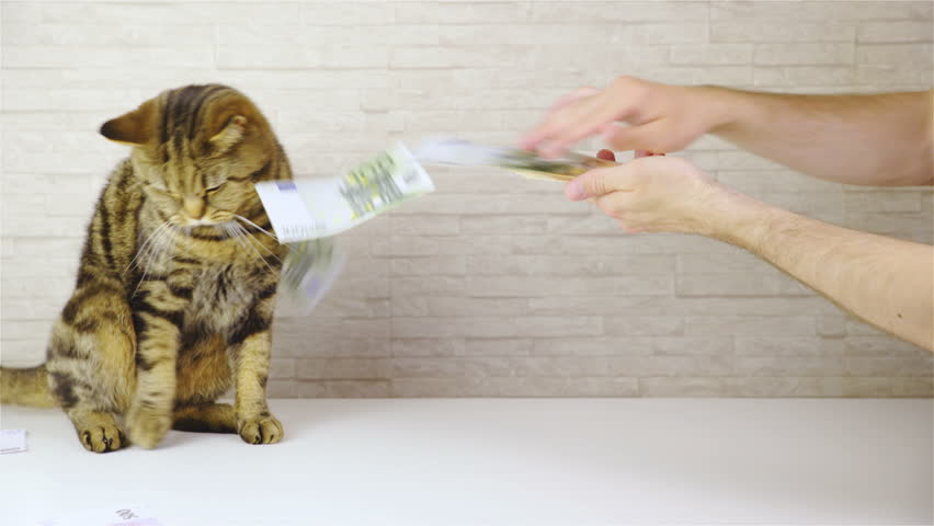 Сhrееру cat and money