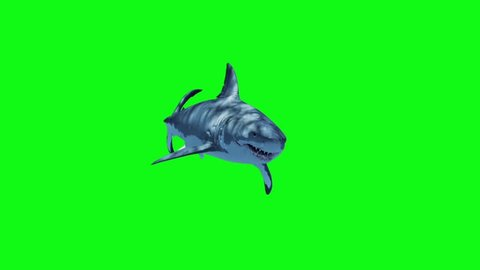 White Shark Swim Fast Green Screen 3D Rendering Animation