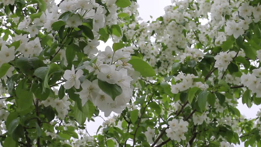 Luxury Tree Big Leaves White Flowers Composition - Best Evening Gown ...