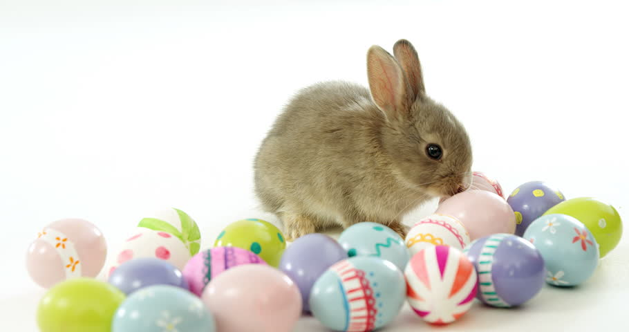 Easter Bunny With Eggs Stock Footage Video 4632842