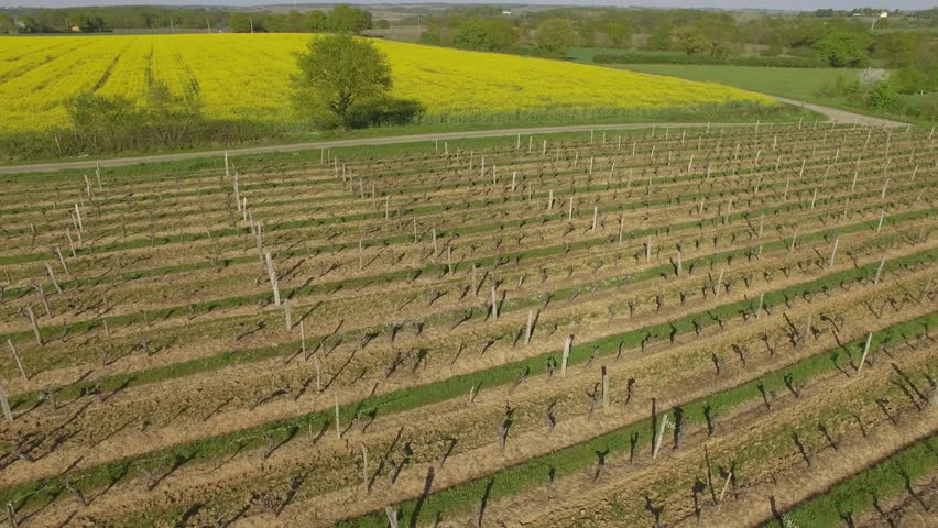 Aerial view of a square of vines in early spring, filmed by drone, Chanzeaux, France Loire Valley, Chanzeaux, Maine-et-Loire, France