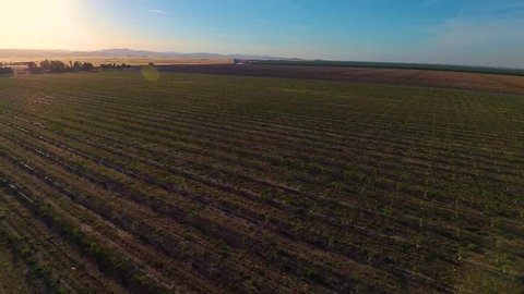 California Sunset Central Valley Farm Fields Rolling Hills