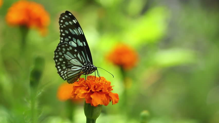 Butterfly and flower in garden #2712512