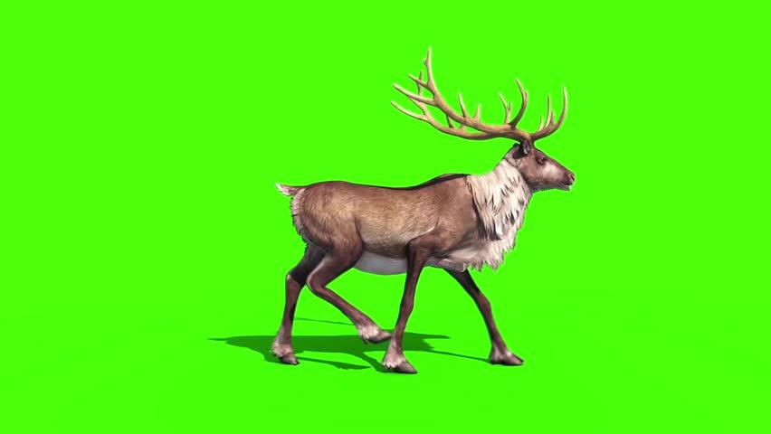 Animal Reindeer Walkcycle Side Green Screen 3D Rendering Animation | Shutterstock HD Video #27223072
