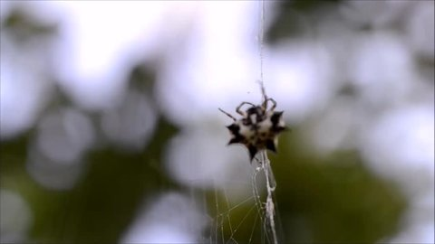 Spider climbing on its own web