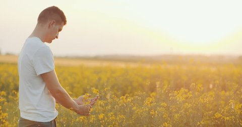 GMO Free - Farmer Examining Rape Blossom In Rape Field