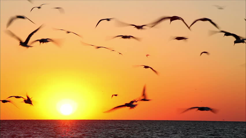 hundreds of birds on a background beautiful sunset 6