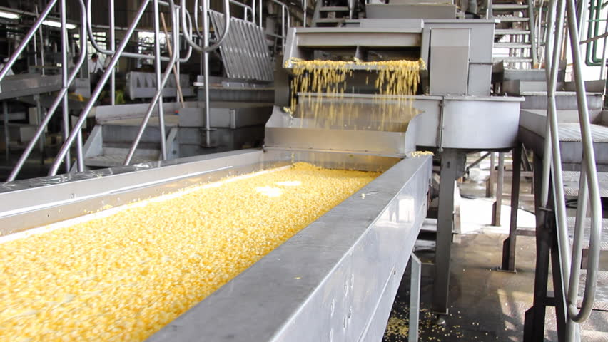 Corn processing factory. Man controls the processing of corn