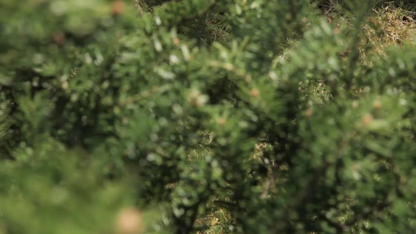 Header of coniferous tree