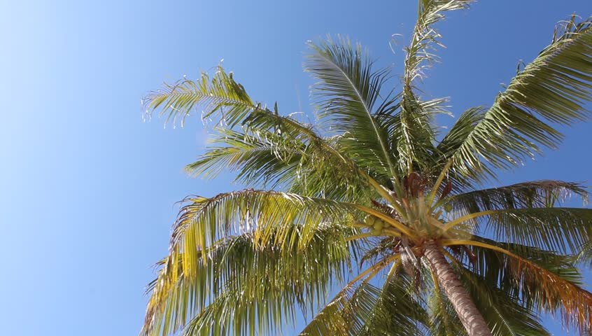 Tropical palm on the beach. Movie