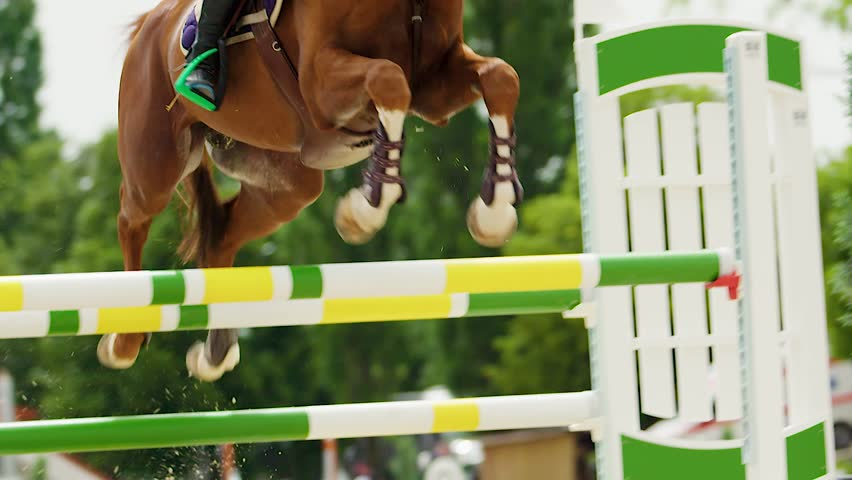 Horse jumping fences in equestrian competition, compilation