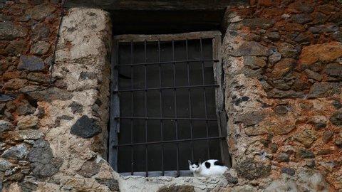 A cat on a window of a village house, filmed in Avila, Castilla y Leon, Spain, in June 2015.