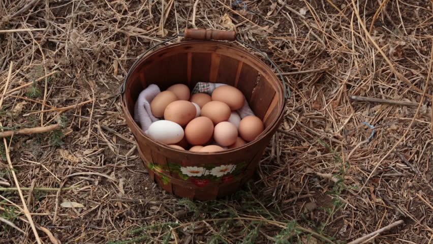 Farm woman checks home grown chicken eggs. Sorting and counting fresh free range eggs in a small painted basket. Better tasting and more nutritious than store bought.