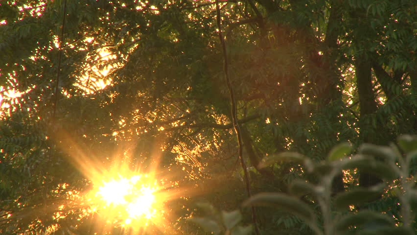 Early morning sun comes up through trees at sunrise, time lapse.