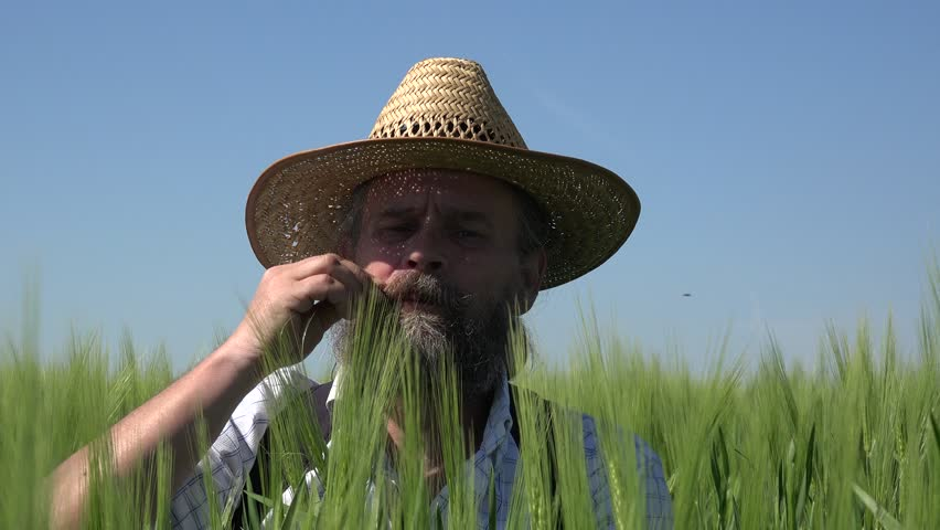 Happy farmer with beard in hat sits among an green wheat field: Summer | Shutterstock HD Video #28505524