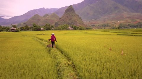 Aerial of farmer working in rice fields, Mu Cang Chai, Vietnam