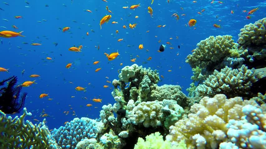 Image result for underwater ocean