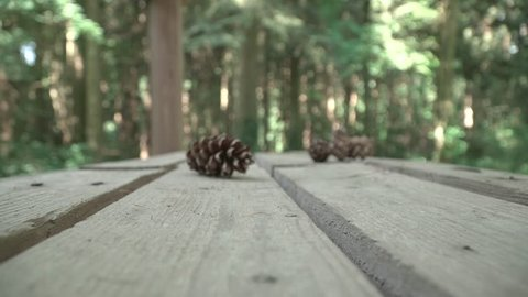 Pine Cone laying on a wooden table in woods