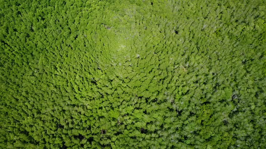 Aerial shot from Drone revealing over forrest.