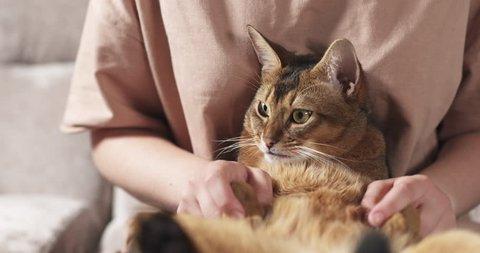 Slow motion of teen girl rubs sad abyssinian cat ears sitting on knees