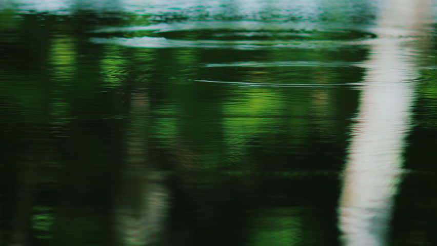 Ripple ring in a pond and tree reflection | Shutterstock HD Video #28841101