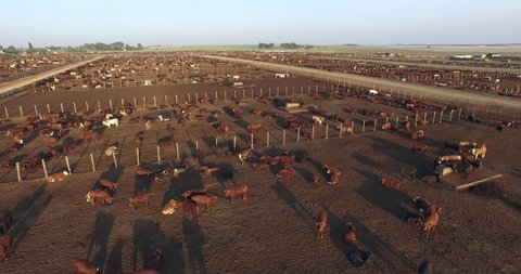 Aerial view of a cattle feedlot