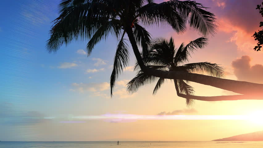 4K Tropical Beach Palm Trees Silhouette Sun Lens Flare Exotic Beautiful Horizon