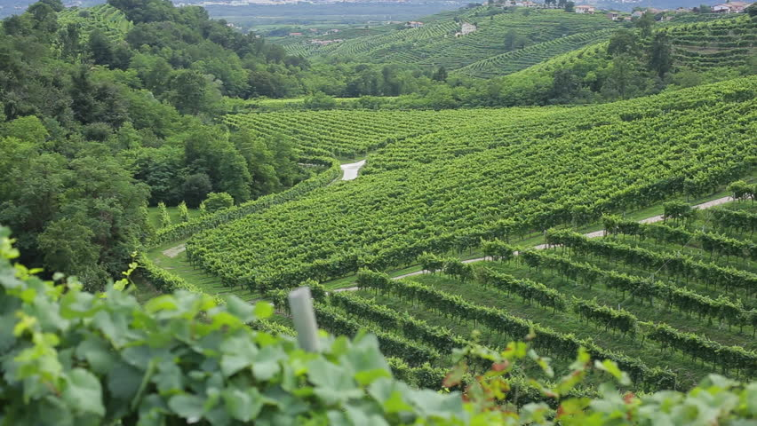 Santo Stefano hill covered with prosecco vineyards in Valdobbiadene, seen from Cartizze hill. Prosecco Superiore di Conegliano-Valdobbiadene is a DOCG wine made with Glera grape in Treviso province.