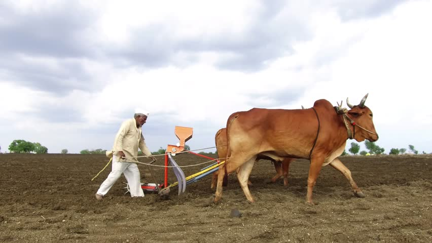 Farmer Sowing Seeds with Seed Stock Footage Video (100% Royalty-free)  28973422 | Shutterstock