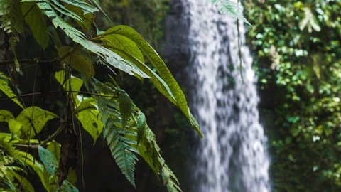 Close up of jungle fern plants moving by breeze of an tropical waterfall