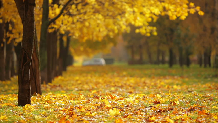 Autumn cloudy landscape - yellowed autumn trees in city park in ...