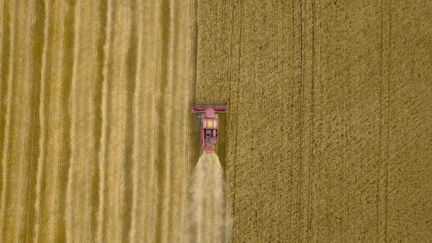 Aerial top view from above of combine harvester gathers the wheat at sunset. Harvesting grain field, crop season. 4K. Beautiful natural aerial landscape. Food industry concept. | Shutterstock HD Video #29156302