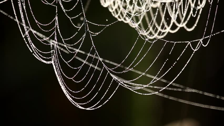 Cobweb closeup, beautiful spider's web