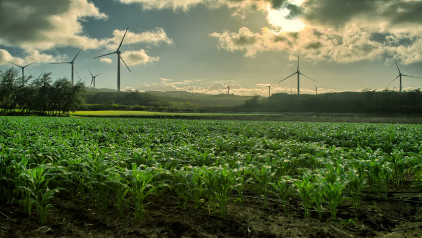 Windmills Turning, Corn Growing, HDR Sunset, Time Lapse