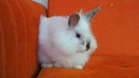 Home rabbit on the couch. Decorative white rabbit. Easter bunny.