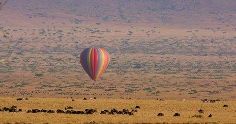 Hot Air Balloon Flying Over Savannah; Maasai Mara Kenya Africa