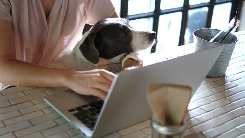 Woman And Her Pet Dog Using Laptop In Cafe. 4K.