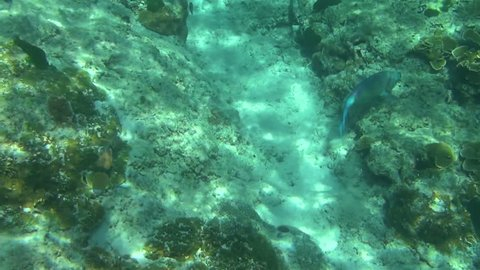 Tropical underwater world, Similan Islands, Thailand