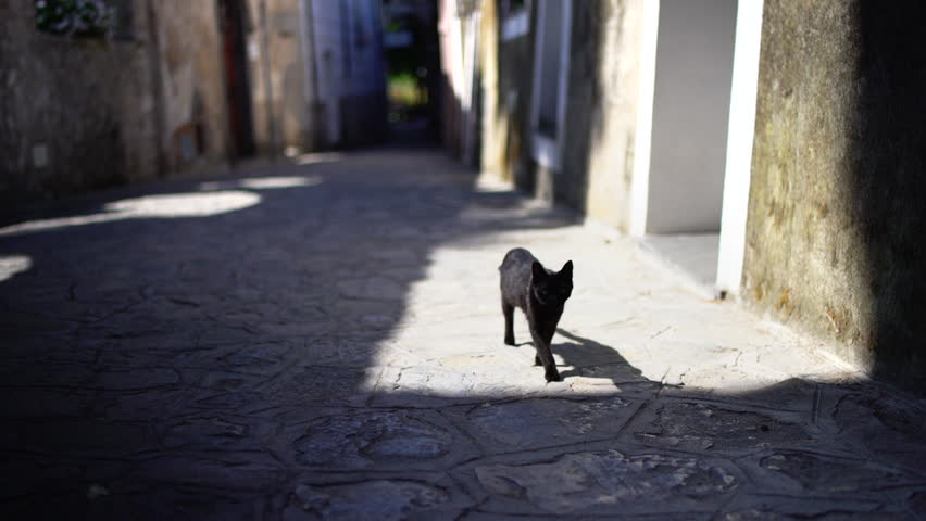 Cute black cat approaching in a sunny Italian road in summer or spring.