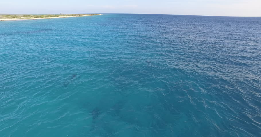 Aerial view of speedboat racing across the pacific ocean stock atlantis kitebeach bonaire dolphins swimming in blue water filmed with drone 4k sciox Gallery