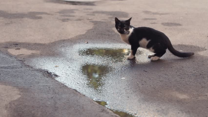 Black and white stray cat sitting near the puddles on the street. Pets outdoors