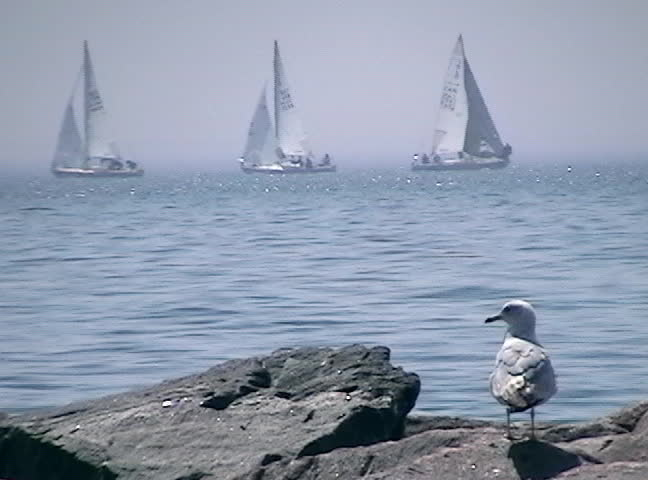 A seagull sits on a rock - Sailboats cross left and right in the background.