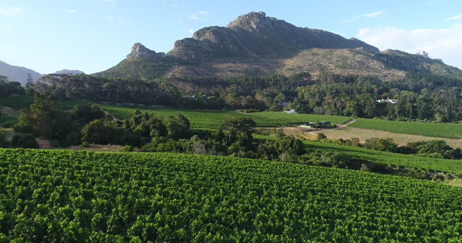 Flying over Wine Vineyards at Sunset in Constantia, Cape Town