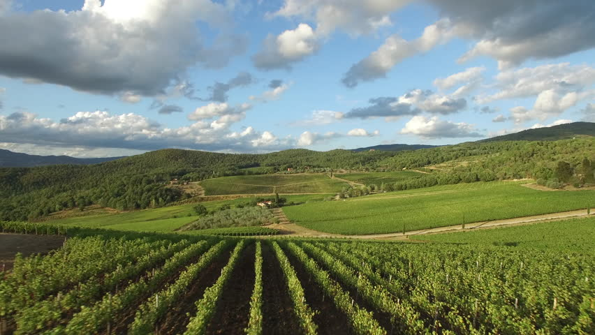 Aerial video in an amazing vineyards landscape, with drone, above vineyards in a beautiful day.