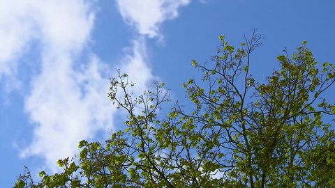 T/L MS LA Clouds moving in blue sky with branch in foreground / Innviertel, Austria