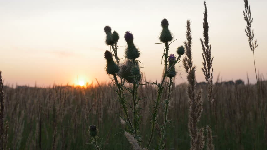 Wildflowers close-up. During the sunset. #30739882
