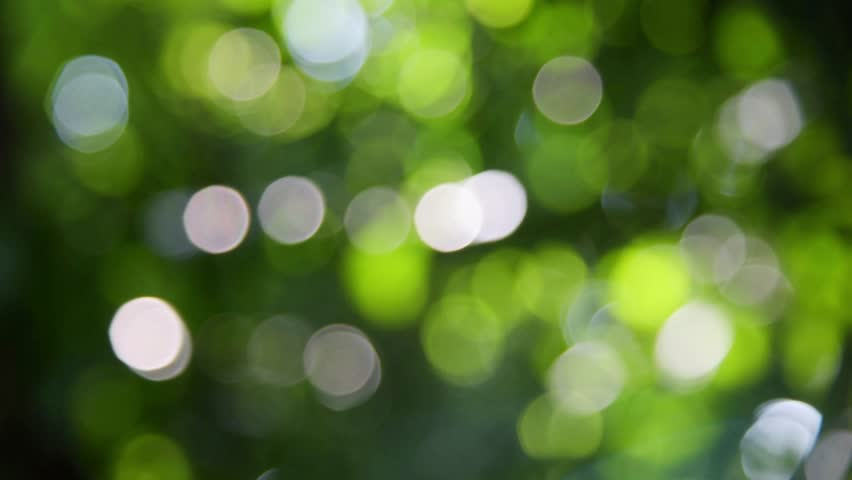Beautiful green nature background, Sunlight shining through the leaves of trees, natural blurred background, Nature abstract background, nature green bokeh
